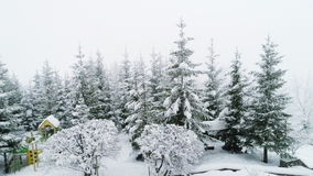 Winter Carpathian landscape, Christmas trees in the snow. stock footage