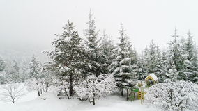 Winter Carpathian landscape, Christmas trees in the snow. stock video