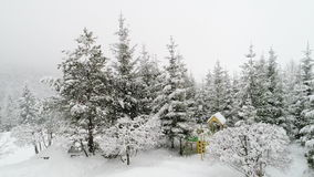 Winter Carpathian landscape, Christmas trees in the snow. stock video footage