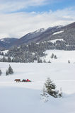 Winter Carpathian Mountains. With sledge Stock Images