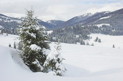 Winter in Carpathian Mountains. With snow-covered trees Royalty Free Stock Images