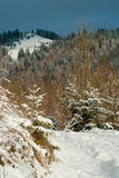 Winter Carpathian mountains, covered with snow, panorama view Royalty Free Stock Images
