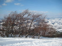 Winter in the Carpathian mountains. Trees under wind and frost Royalty Free Stock Image
