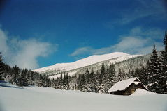 Winter Carpathians. Hunting-box high firs, snow-capped. Visible grain Stock Photo