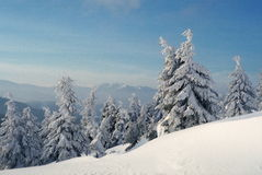 Winter Carpathians Royalty Free Stock Images