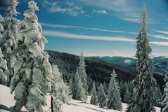 Winter Carpathians Royalty Free Stock Photography