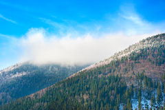 Winter in the Carpathians Mountains Royalty Free Stock Photos