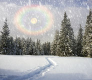 Winter in the Carpathians. Snowing in the Carpathian mountains, Ukraine, on one of the hills, wonderful frosty day Stock Photo