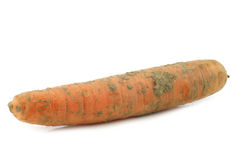 Winter carrot Stock Photography