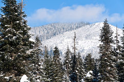 Winter in the Cascade mountains Stock Images
