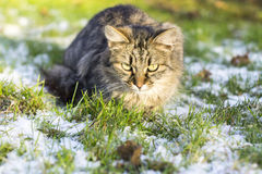 Winter Cat Stock Photos
