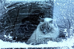 Winter cat. Sitting in the window and looks at the snowflakes Stock Image