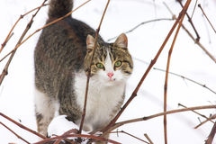Winter and a cat Stock Photography