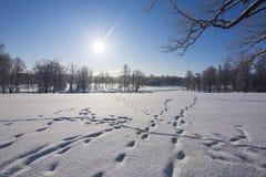 Winter in Catherine park, Tsarskoe Selo, St. Petersburg, Russia. Winter pond in Catherine park, Tsarskoe Selo, St. Petersburg, Russia royalty free stock photography