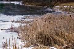 Winter Cattails by a Frozen Lake. Located in the Blue Ridge Mountains of Virginia, USA Stock Photo