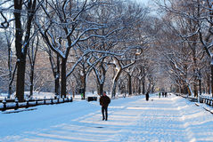Winter, Central Park. The Mall in New York`s Central Park becomes a winter wonderland following an overnight snow Royalty Free Stock Photos