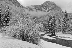 Winter in Chartreuse Black and white stock photo