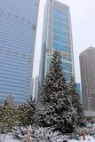 Snowy day in Chicago. Winter Chicago cityscape with downtown skyscrapers in a mist and trees covered by fresh snow on a foreground. Vertical composition Royalty Free Stock Photo
