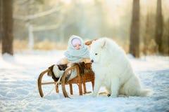 Winter children portrait with samoyed dog stock photo