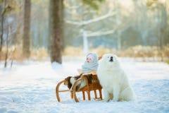 Winter children portrait with samoyed dog stock photography