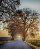 Winter chilly morning in road with sunrise royalty free stock image