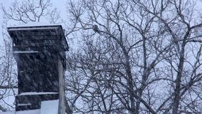 Winter Chimney Smoke in the Snowfall. Smoke Comes From the Chimney. Heavy Snowfall in Winter Frosty Day stock video