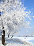 Winter in China, Wusong Island. Taken during winter on Wusong Island, China. Very cold, sometime -20 degree Celsius. Only crazy photographer will venture there Stock Image