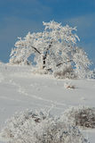 Winter Chrismas tree covered with snow Royalty Free Stock Images