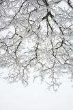 Winter and Christmas Background. Photo of Tree Branches Covered with Frost and Snow. Royalty Free Stock Photos