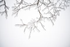Winter and Christmas Background. Photo of Tree Branches Covered with Frost and Snow. Stock Photos