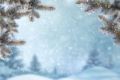 Winter Christmas background with fir tree branch. Stock Photography