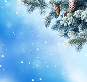 Winter Christmas background with fir tree branch and cones Stock Photos