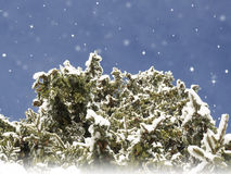 Winter Christmas  card. Snowing landscape.Mountain village Royalty Free Stock Photo