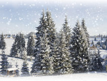 Winter Christmas  card. Snowing landscape Royalty Free Stock Images