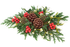 Winter and Christmas Decoration. With holly, mistletoe, ivy, cedar cypress and juniper leaf sprigs and pine cones on white background Royalty Free Stock Photos
