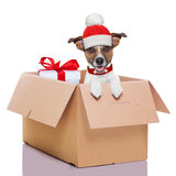 Winter christmas dog Stock Images