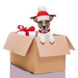 Winter christmas dog Stock Images