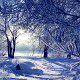 Winter Christmas forest Stock Images