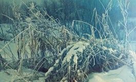 Winter christmas  landscape Stock Image