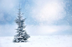 Winter Christmas landscape with spruce and snowflakes Stock Images