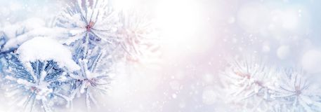 Winter christmas natural background. Pine branches in the snow in a beautiful snowy forest. Banner format. Copy space. Winter wond