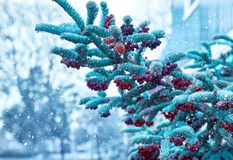 Winter christmas new year`s tree branch royalty free stock image