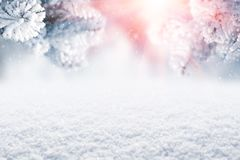 Winter Christmas scenic background. Snow landscape with spruce branches covered with snow and sunlight through the frozen tree. Branches. Sky and sunlight stock photo