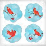 Winter Christmas Sticker Birds Rowan Tree Branches Royalty Free Stock Images