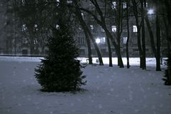 Winter Christmas Tree in the Snowy Park. Russia. Black and White. Winter Christmas Tree in the Snowy Park. Black and White Stock Photo