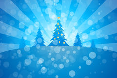 Winter Christmas trees Stock Photo