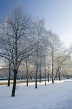 Winter in the city Royalty Free Stock Image