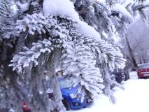 Winter in the city. A fir branch covered with snow stock images