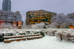 Winter city landscape with bushes and trees covered with snow an Royalty Free Stock Photos