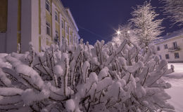 Winter city landscape. Frozen trees and buildings. Cold night. Royalty Free Stock Photo
